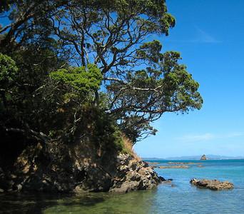 Pohutukawa trees above the reefs