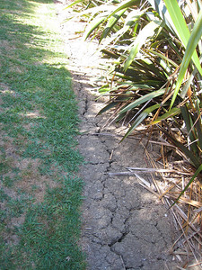 Very dry soil was evident due to the local summer drought.