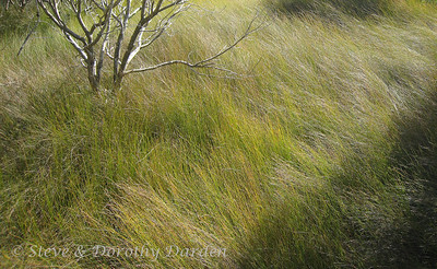 Lovely grasses have grown into the mangroves at the shoreline.