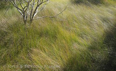 WH: Parihaka Scenic Reserve