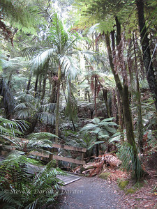 Native tree ferns and palms are plentiful along the creeks and streams.