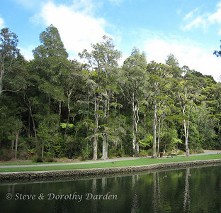 Waterfront in Mair Park on the Hatea River shows off its mature native trees.