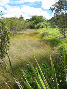 Grasses at the edge of the mangroves