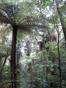 Some of the tree ferns grow to great  heights.