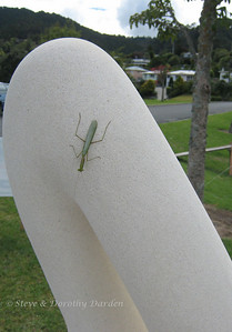 "A praying mantis landed on Glen Davis' sculpture ""Gentle Harmony""."