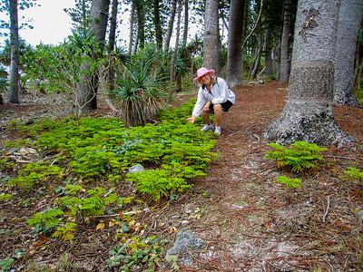 Dorothy examines Columnaris pine seedlings.