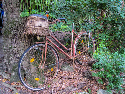 Cleo's ancient bicycle rests in her garden.