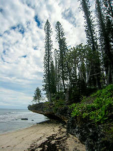 Columnaris pines rooted in fossilized coral on the windward side of the island