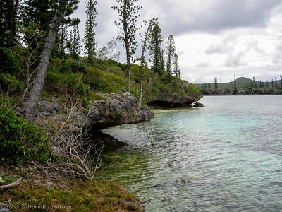 Columnaris pine trees grow on the ledges undercut by the sea.