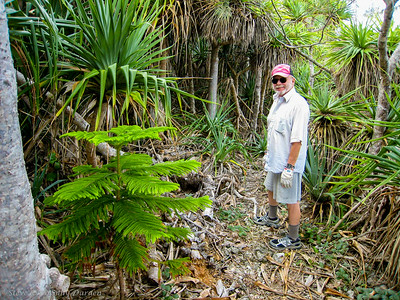Steve found himself surrounded by Pandanus and Columnaris pines