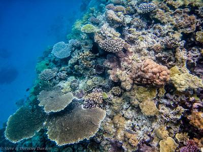 Side of reef