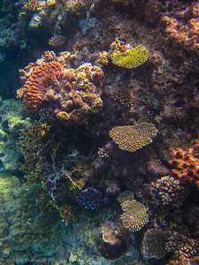 Many types of corals hang on to the side of the reef.