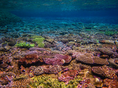 top of the reef at mid-tide