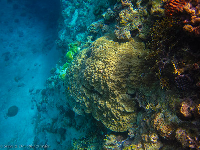 Very large corals on the side of the reef