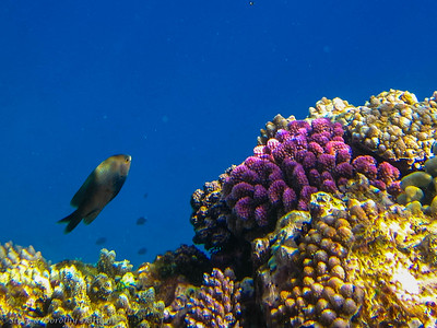Life on the edge of the reef