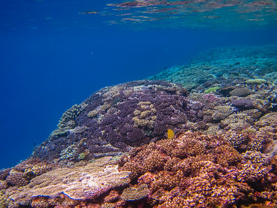 Mounds of coral growing on mounds of coral for millenia.