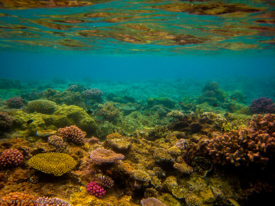 Top of the reef at Lifou