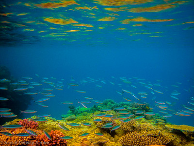 Schools of small fish swirled above the reef, feeding on plankton.