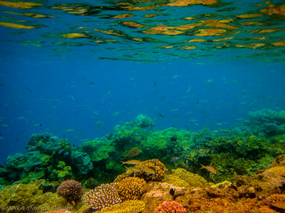 This reef hosts many fish.