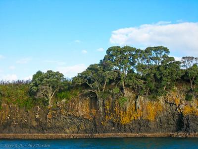 Magnificent Pohutukawa trees clinging to an island