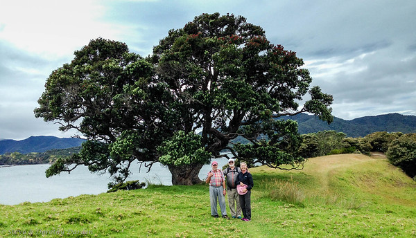 Steve, Fred and Margaret under Pohutukawa tree