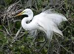 Egret in Venice