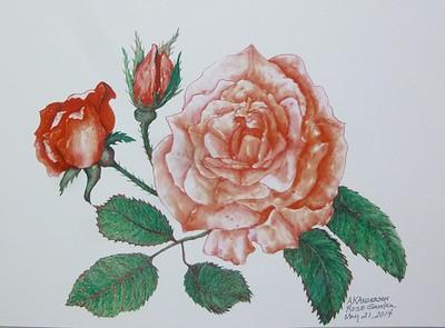 Rose Garden by AKAnderson (1)
