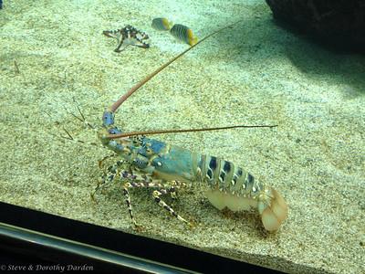 Porcelain lobster