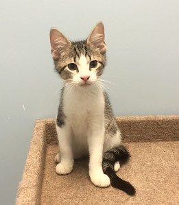Franklin County Animal Harbor Pet of the Week.