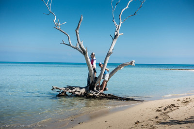 Dorothy and Susie in the Ilot Maitre driftwood tree.