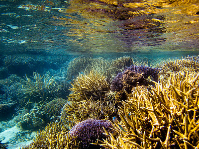 Reef at Ilot Mato at mid-tide