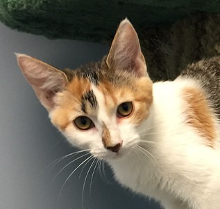 Franklin County Animal Harbor Pet of the Week