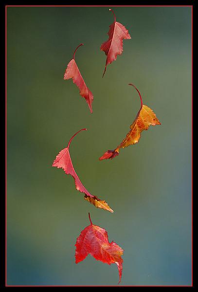CR-Autumn_Leaves-HagaM