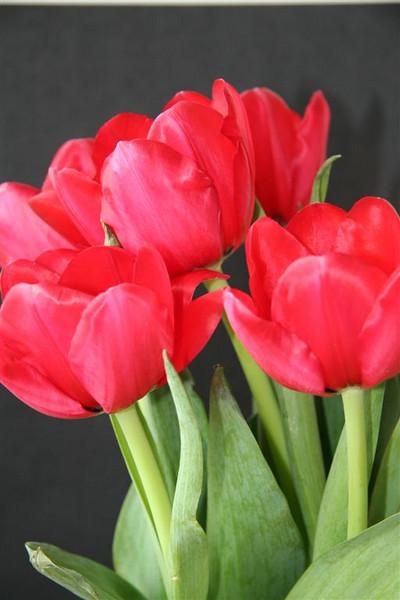 TT-7-Tulips_on_Black-EllisV