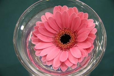 TT-3-Pink_Gerber_in_a_Bowl-EllisV