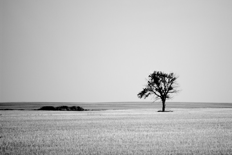YE-BW-The Saskatchewan Savana-Maitland-WhitelawL