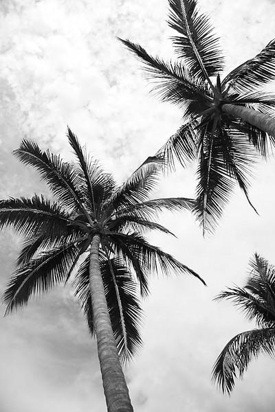YE-BW-Tall  Palms-Valerie Ellis