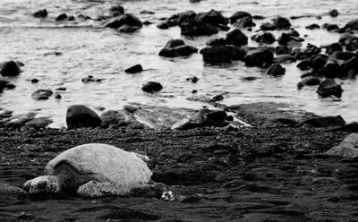 YE-BW-Black-Sand-Beach-SmithT