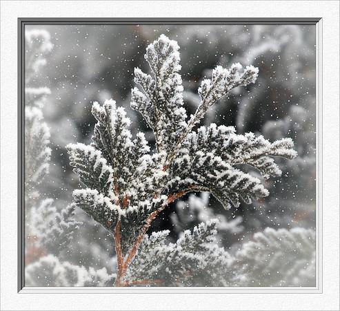 YE-CR-Snowed In-HoffortA