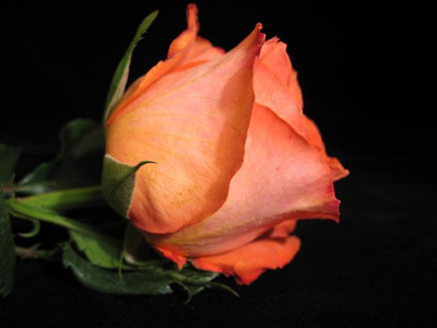 CO-A rose by any other name-Gordon Sukut