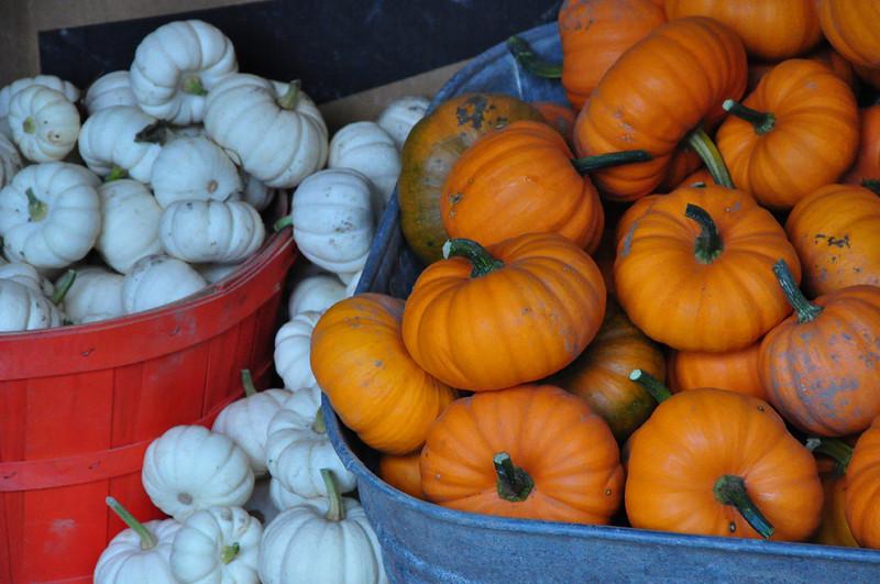 CO-Bountiful_Harvest-Kuzma L