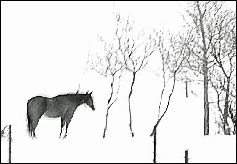 AR Print-Horse Spirit-Betty Calvert