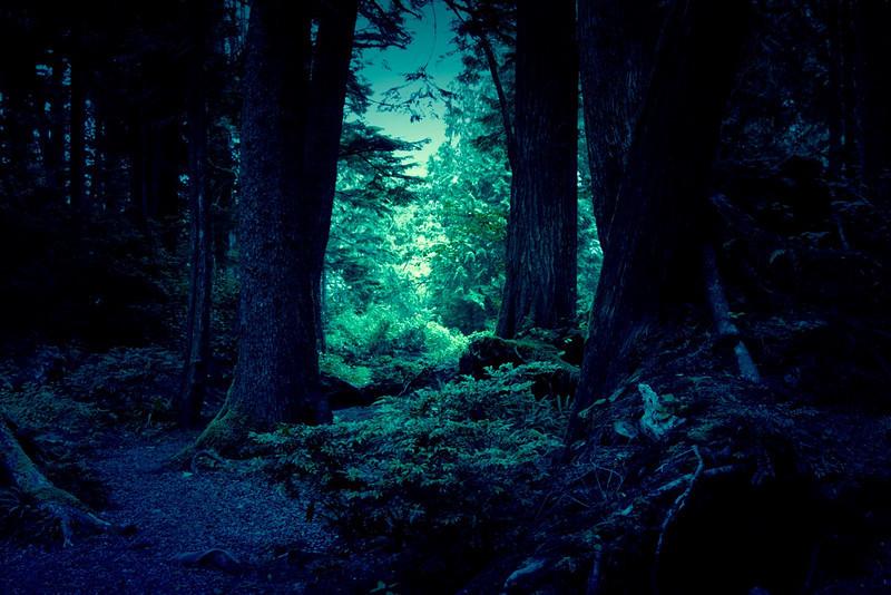 AR-Where Fairy Tales Live-Karen Pidskalny