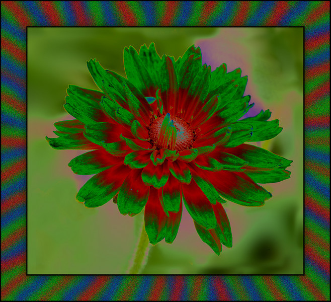AR-A Burst of Color-May Haga