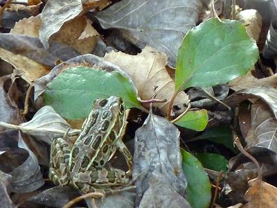TR-Camouflage-Gayvin Franson