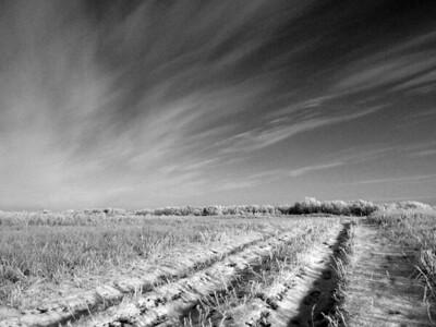 BW-Living Sky-Gayvin Franson