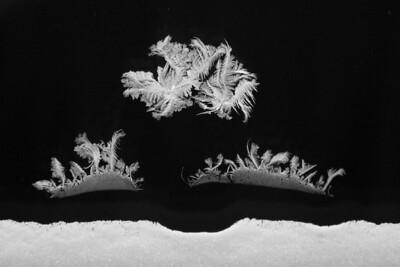 BW-Frosty Scene-Hilda Noton