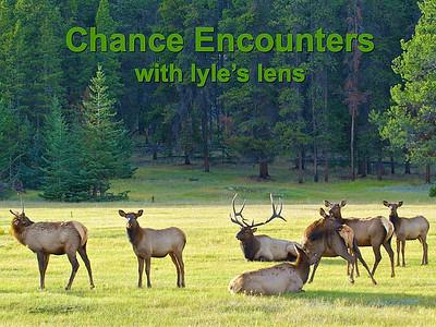 Lyle Krahn-Chance Encounters