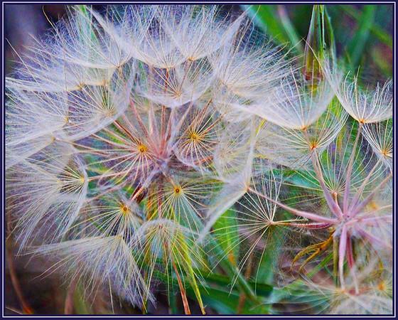 AR Print-Sun Seeds-Betty Calvert