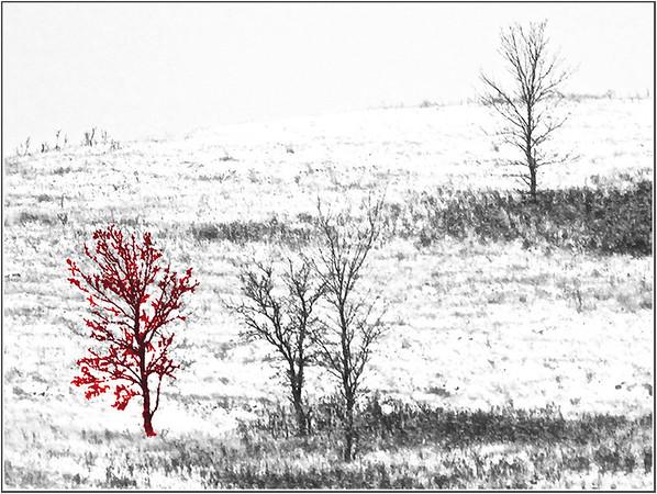 AR-Trees On The Hill-Betty Calvert